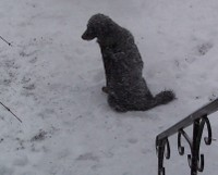 Betty_snow
