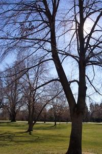Bare_trees_1