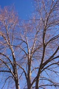 Bare_trees_6