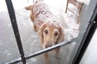 Humphrey_snow